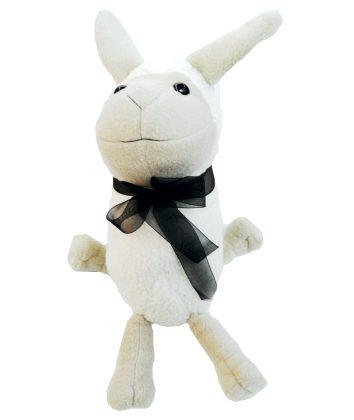 Karoo Sheep floppy ram
